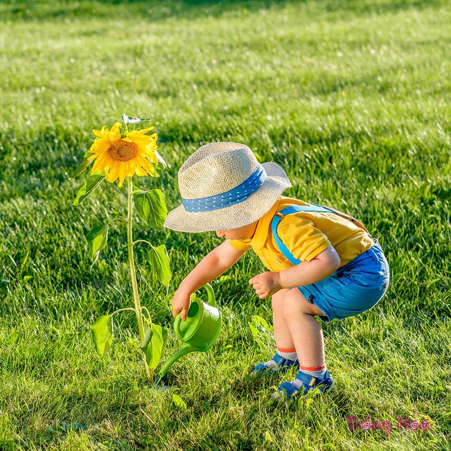 7 Lời khuyên tốt nhất khi trồng hoa hướng dương trong vườn