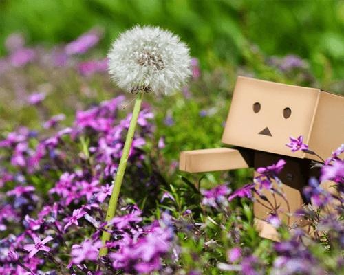 Chùm thơ hay về hoa bồ công anh