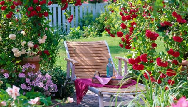 Trang trí sân vườn bằng hoa hồng leo cực ấn tượng
