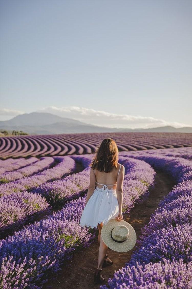 Sự tích hoa oải hương Lavender