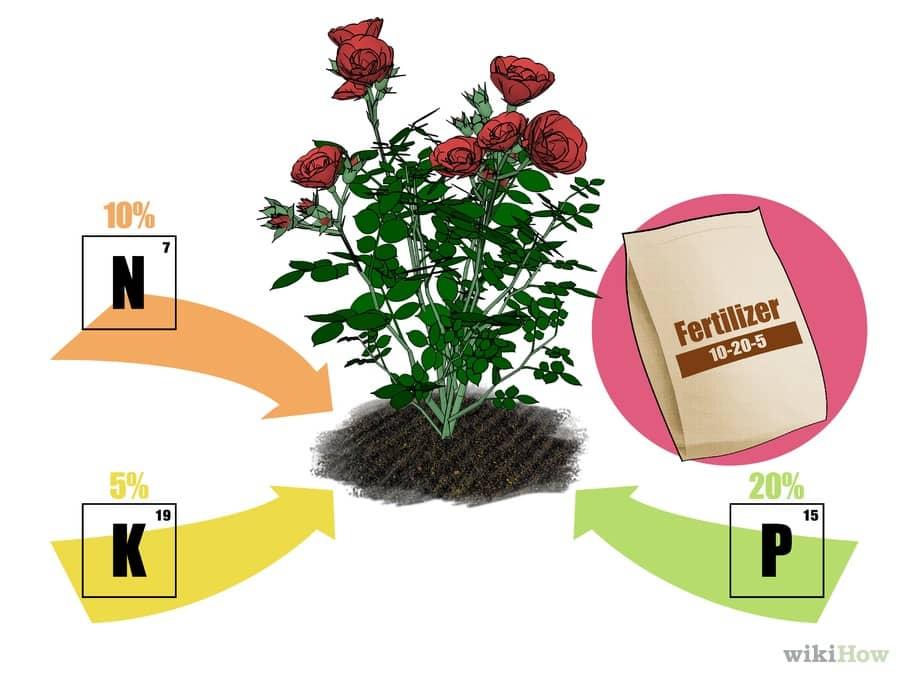 Kỹ thuật bón phân cho cây hoa cảnh