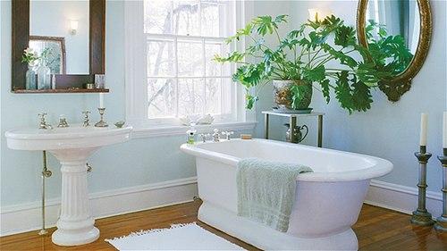 Kỹ thuật trồng hoa, cây cảnh trong nhà