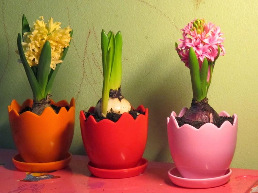 Trồng hoa Dạ lan hương đuổi côn trùng hiệu quả