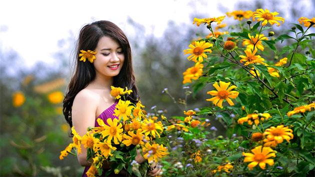 Trồng hoa dã quỳ cho khu vườn ngập sắc vàng
