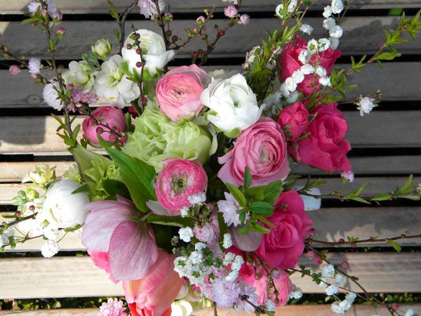 Kỹ thuật trồng hoa Mao lương bằng củ đẹp rực rỡ