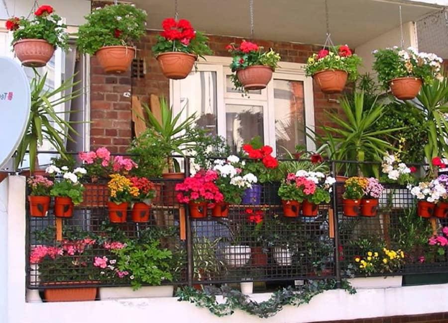 Kỹ thuật trồng hoa ở ban công tuyệt đẹp