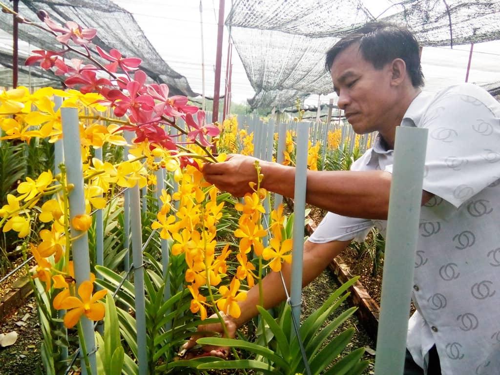 Hướng dẫn trồng hoa lan cắt cành nở quanh năm