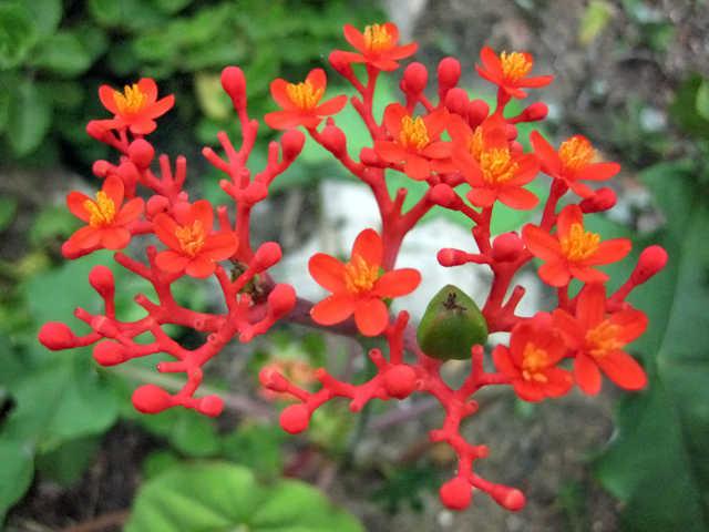 Kỹ thuật trồng hoa sen lục bình hút lộc vào nhà