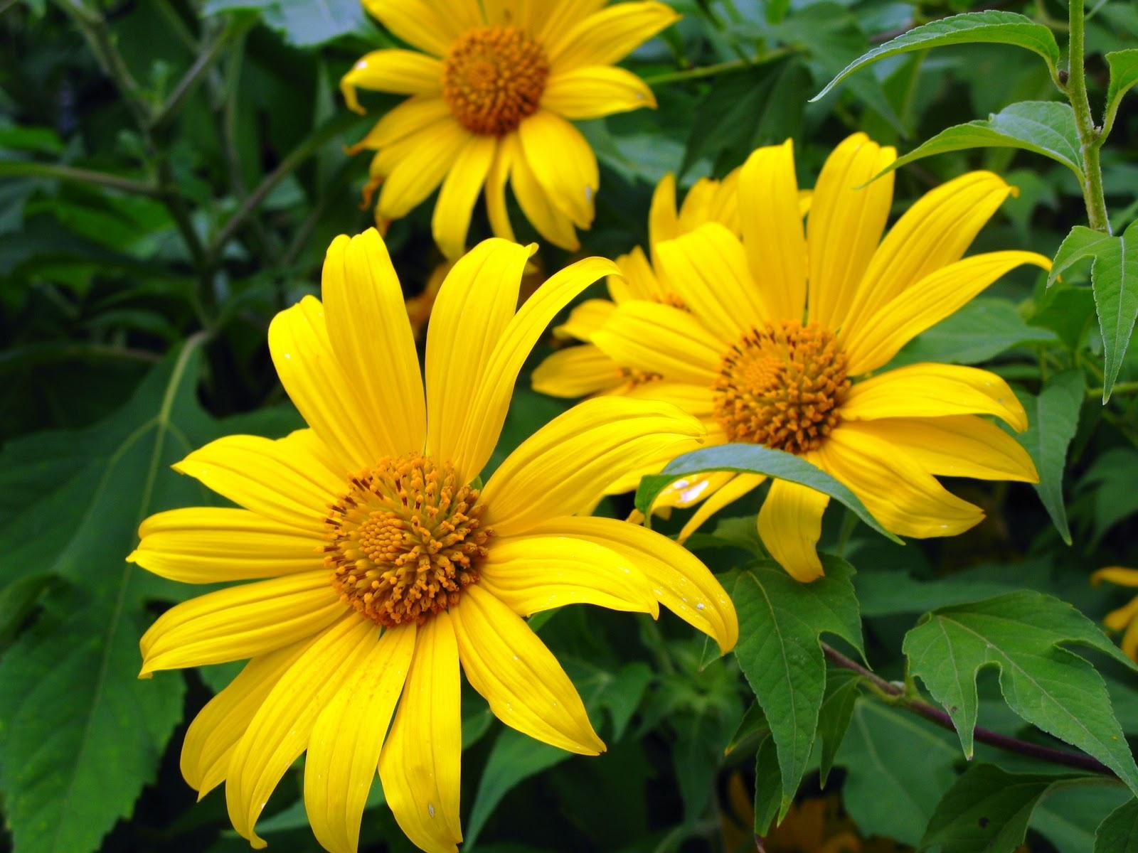 Thơ hay về hoa dã quỳ