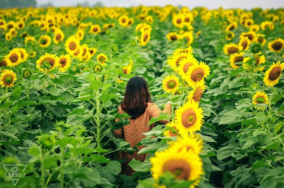 Thơ hay về hoa hướng dương
