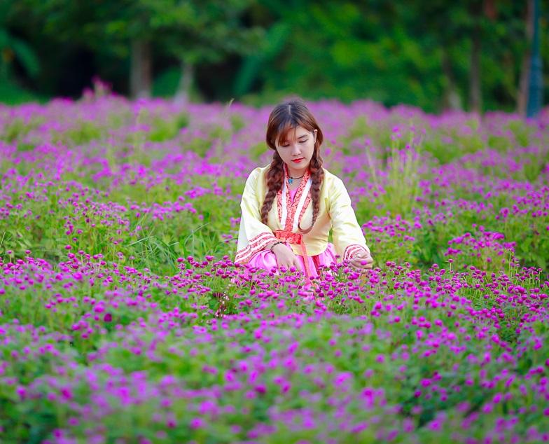 Hướng dẫn trồng hoa cúc bách nhật