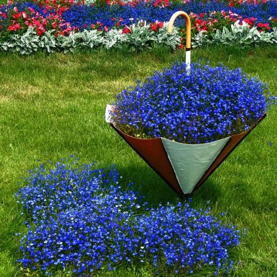 Kỹ thuật trồng hoa thúy điệp