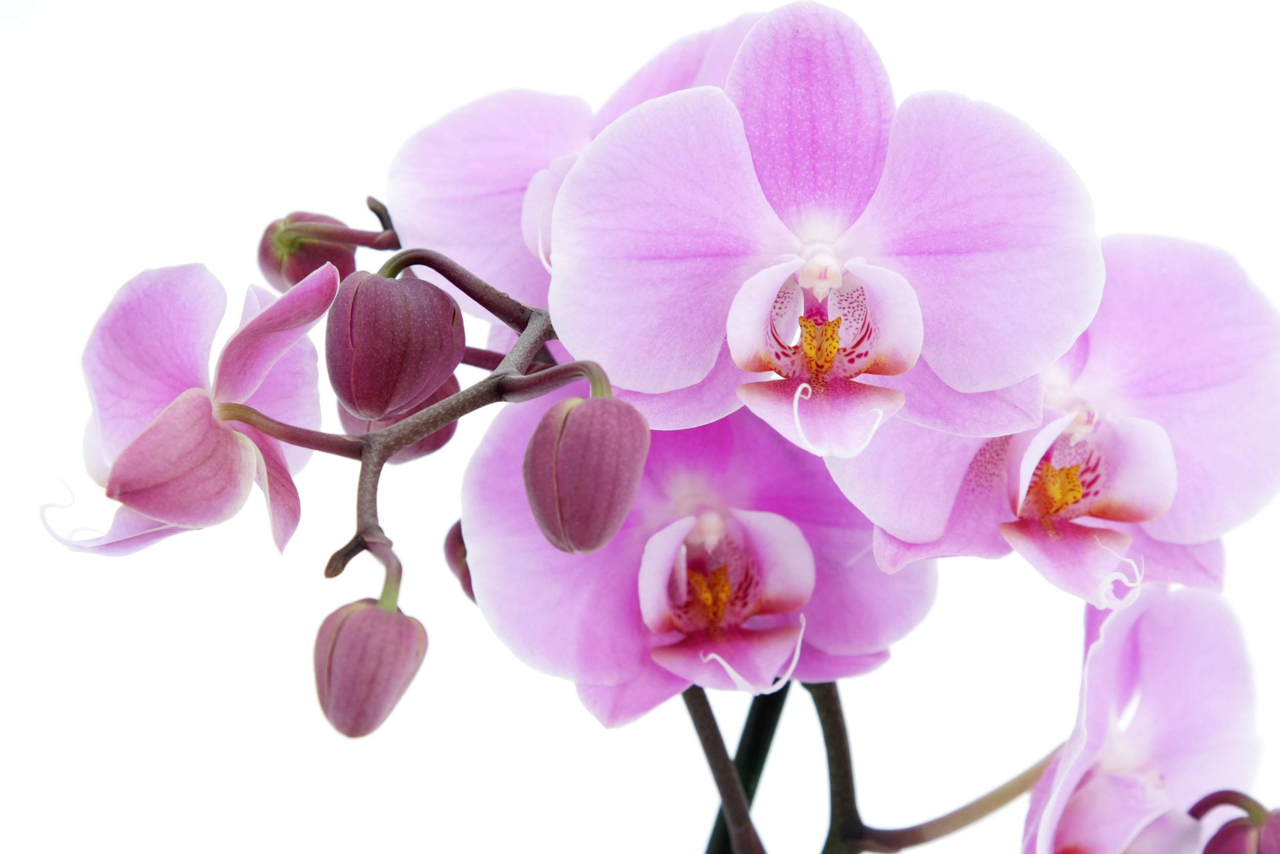 Những bài thơ hay về hoa lan