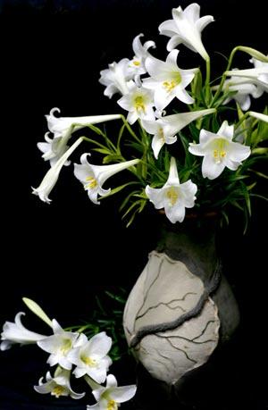 Những bài thơ hay về hoa loa kèn