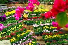 Đón xuân cùng các loại hoa tết ngập tràn sắc hương