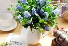 Kinh nghiệm chọn hoa phong thủy chiêu tài cho gia chủ