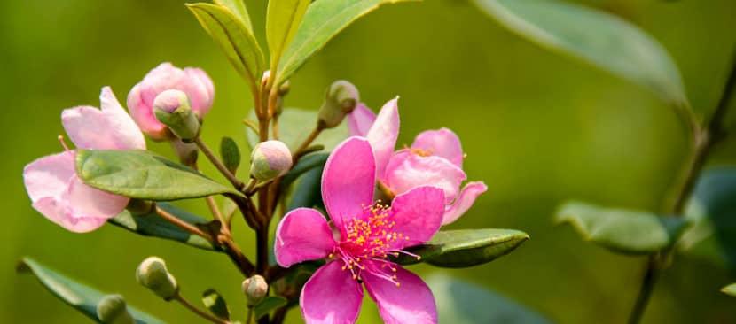 Những bài thơ hay về hoa sim tím