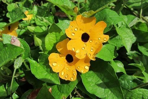 Hoa treo chậu đẹp dễ trồng phù hợp cho mọi không gian