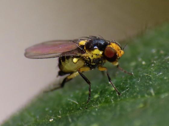 5 loại sâu hại trên cây hoa cúc