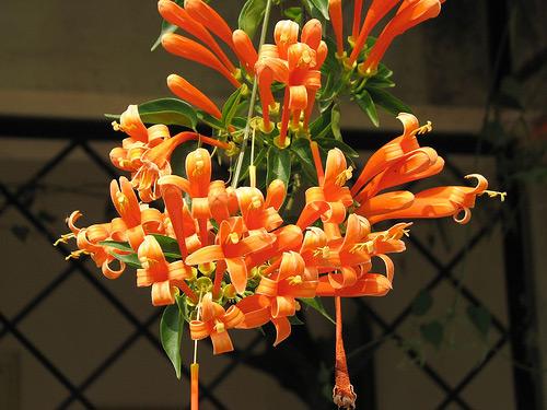 Mách bạn cách chọn giàn hoa leo đẹp