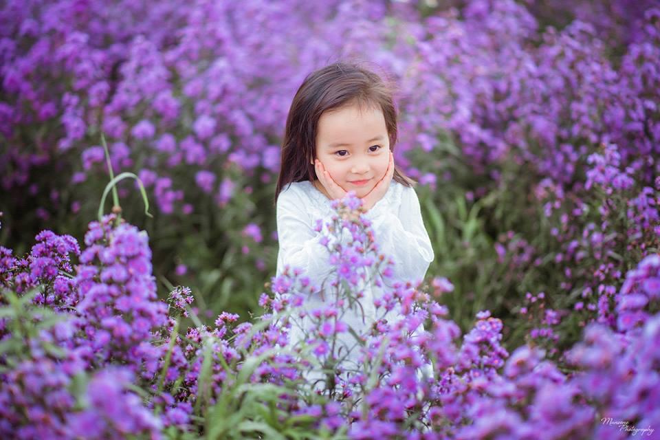Thưởng thức những bài thơ hay về hoa tím