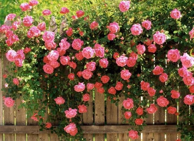 Ý tưởng làm giàn hoa leo đẹp hút hồn