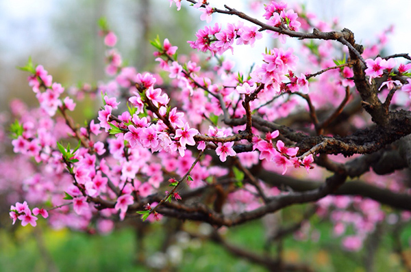 9 loại hoa nên cắm trên bàn thờ ngày tết mang tài lộc cho gia chủ