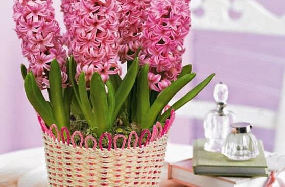 Lựa chọn hoa phong thủy mang vận may cho 12 con giáp