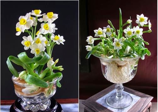 6 loại hoa thường dùng trong phong thủy