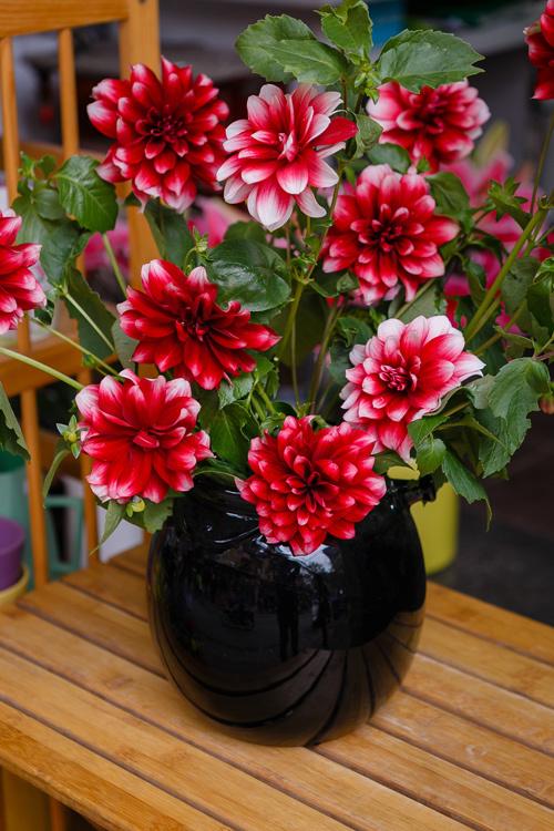 Ý nghĩa các loại hoa ngày tết mang may mắn tài lộc