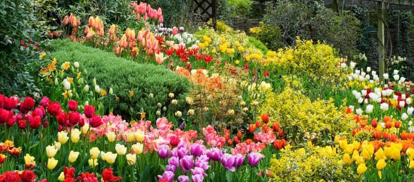 Những bài thơ hay nhất về các loài hoa đua nahu khoe sắc