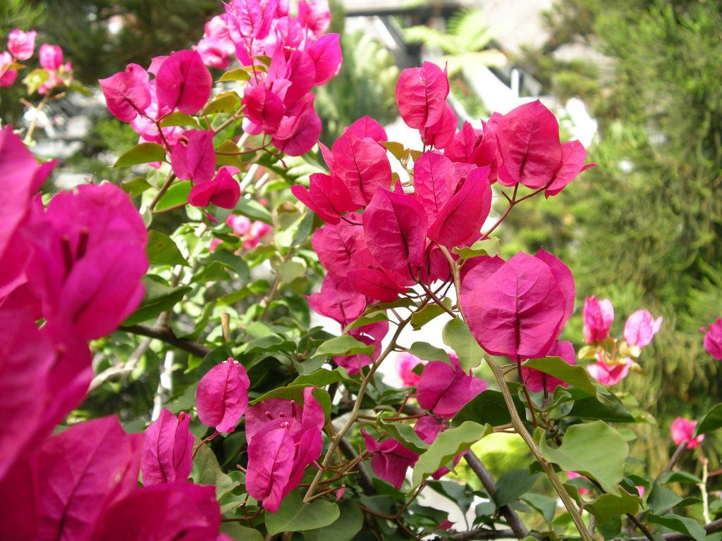 Những bài thơ hay về hoa giấy