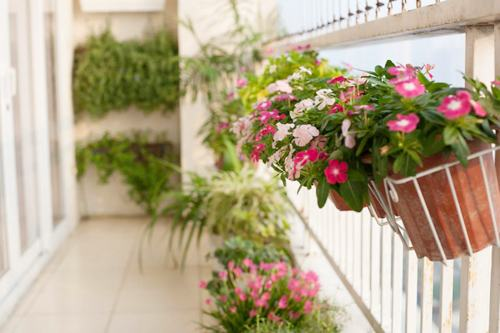 Lưu ý khi trồng hoa ban công cho hoa nở đẹp rực rỡ