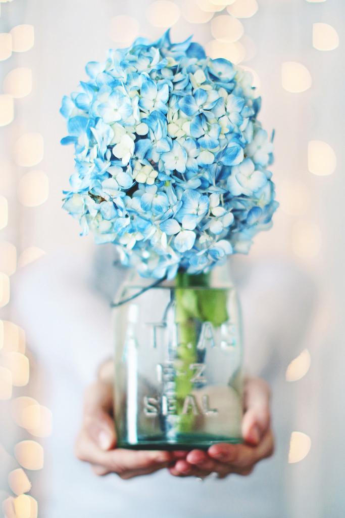 Hoa giáng sinh trang trí noel