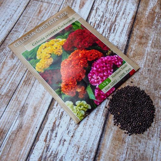 Hướng dẫn kỹ thuật trồng hoa mào gà đón Tết