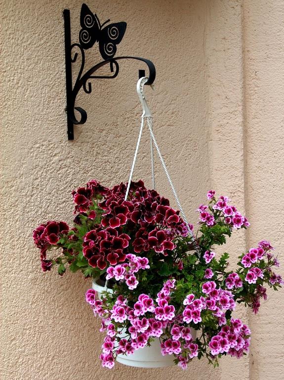 Các loại hoa treo giỏ nở đúng dịp tết