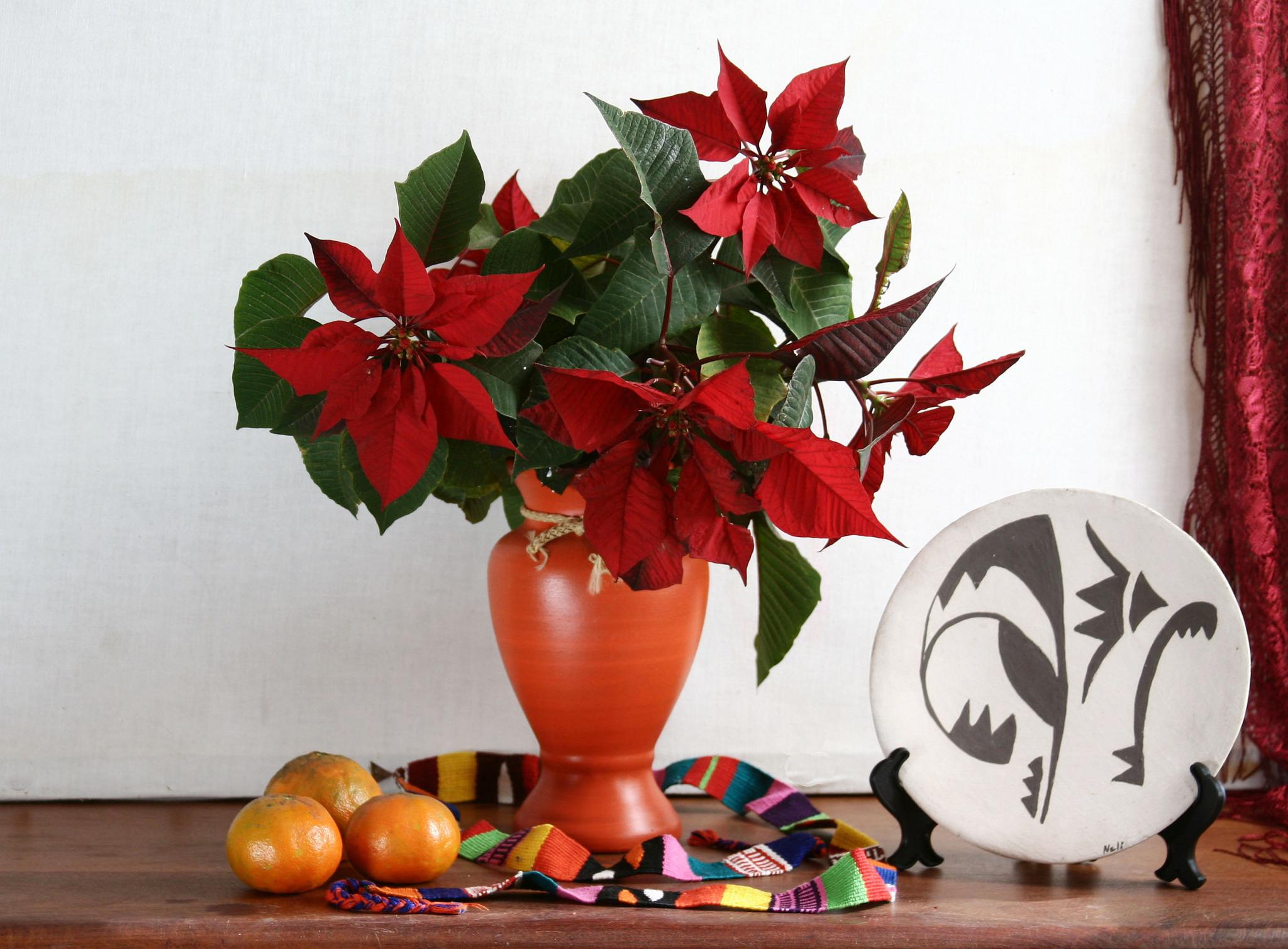 Học cách trồng hoa trạng nguyên trang trí Tết