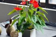 Bật mí 5 loại hoa văn phòng để bàn