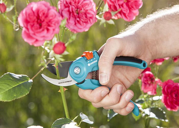 Bật mí các mẹo hay chăm sóc hoa hồng