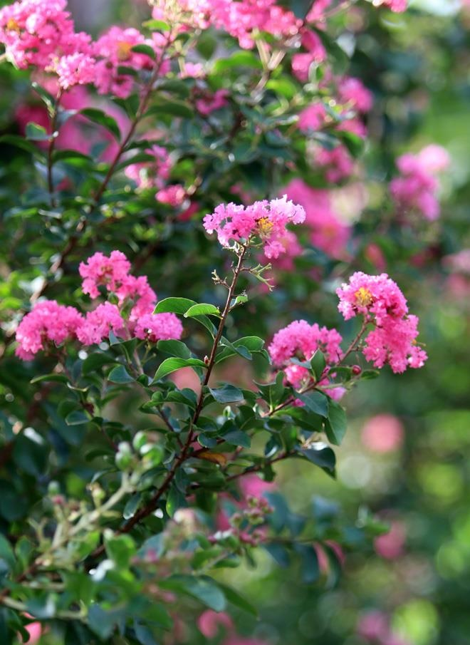 Mách bạn cách chọn các loại hoa 8/3 cực kỳ ý nghĩa