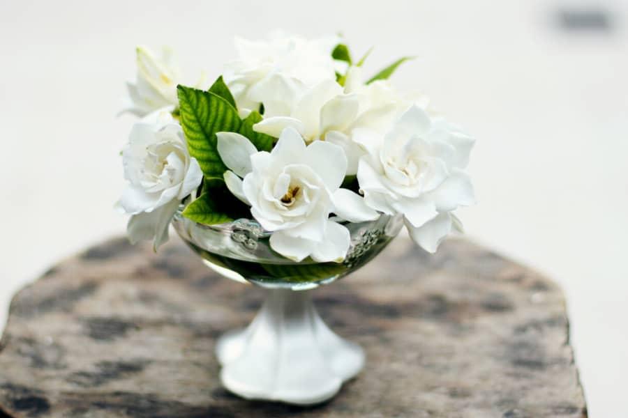 Kỹ thuật nhân giống hoa dành dành
