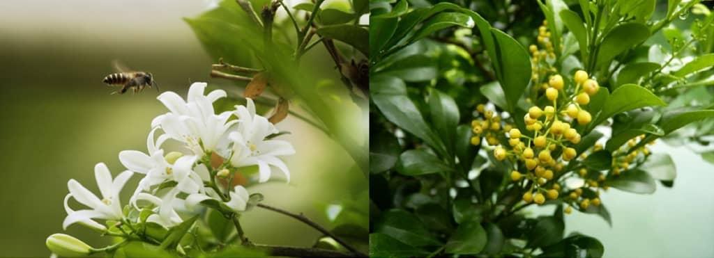 Mệnh kim nên trồng hoa gì
