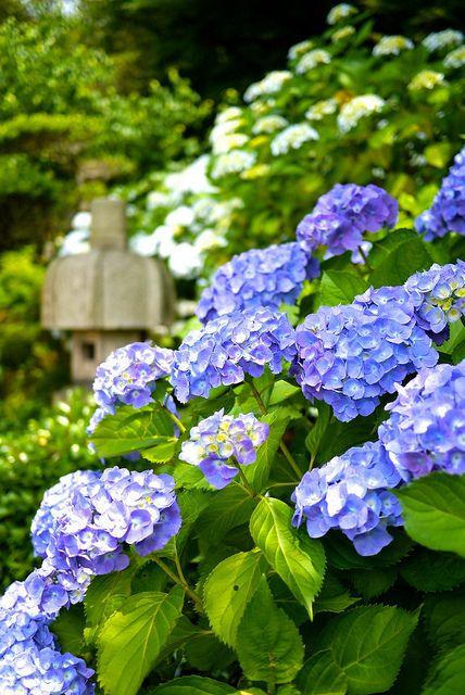 Người mệnh mộc nên trồng 4 loại hoa này