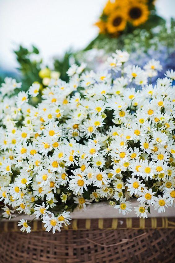 Người mệnh thủy nên trồng hoa gì