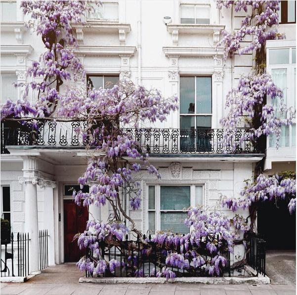 Ngôi nhà có giàn hoa leo đẹp