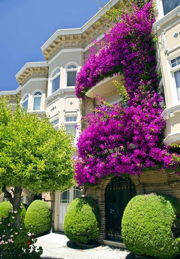 ngôi nhà có giàn hoa leo đẹpa