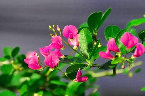 Học cách ghép cành nhân giống hoa linh sam