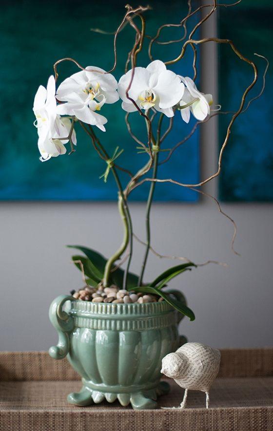 Cắm hoa lan hợp phong thủy