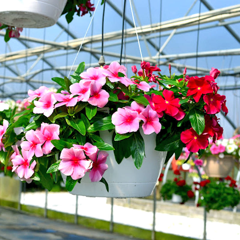 10 loại hoa trồng ban công mang lại may mắn