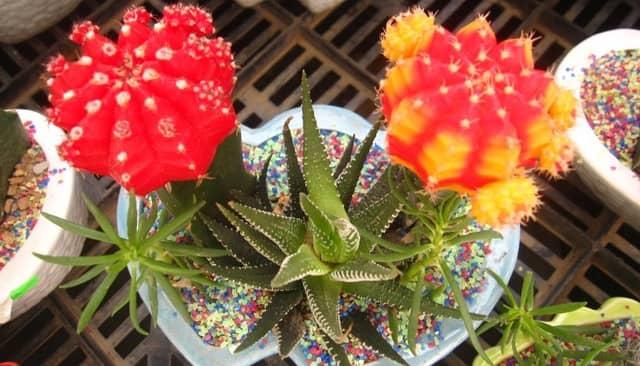 4 loại hoa để bàn hút bức xạ máy tính cực tốt